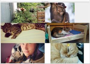 Cat-pictures